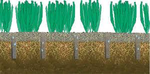 lawn care grass soil photo