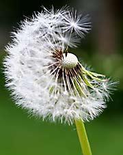 weed removal company va