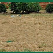 dormant lawn 22311