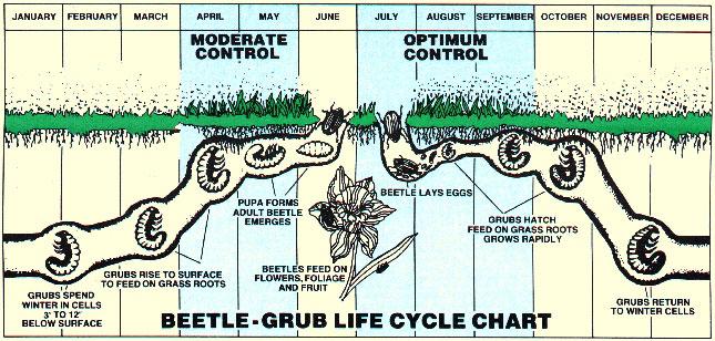 lawn grub control northern va