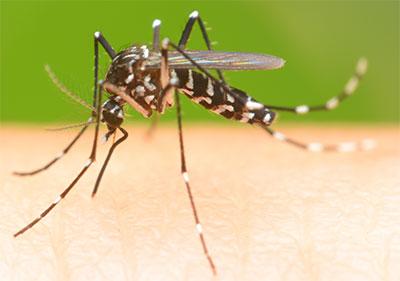 mosquito control prevention Northern VA