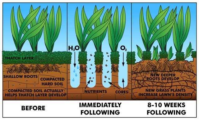 Lawn Core Aeration Programs Call 800 776 5296 Prolawn