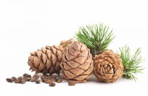 cedar cones and needles