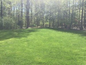 Picture of a lawn after ProLawn's Services