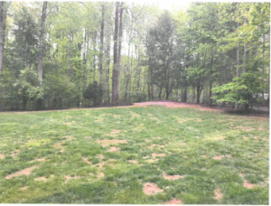 Picture of a lawn before ProLawn's Services