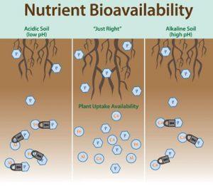 Nutrient Bioavailability